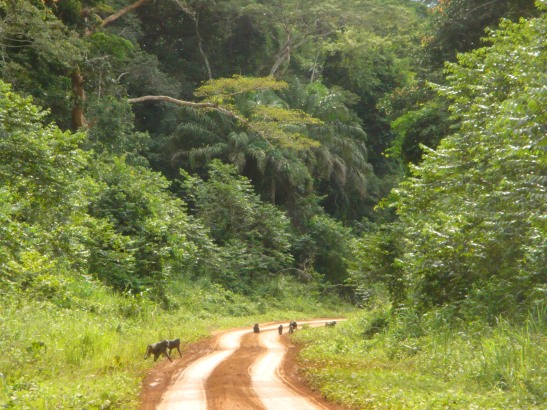 Road around the Ituri Forest